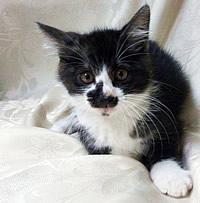 毛足の長い白黒模様の生後約2ヶ月の男の子