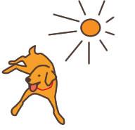 日光浴させる